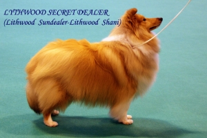 sheltie-graf.ru. Crufts-2014